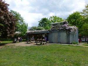 Pistachios in the Pleasaunce, with blooming roof and solar water panel.