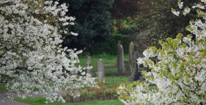 Graves framed by blossom, MW