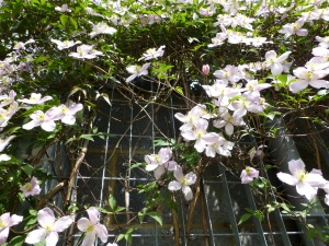 The cafe's walls in bloom